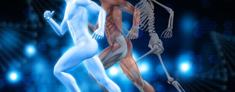 Интересные факты о суставах